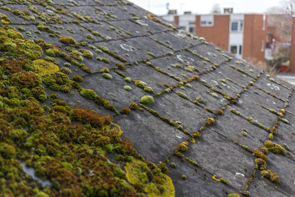 Is Moss On My Roof A Problem? - Home-pro Roofing